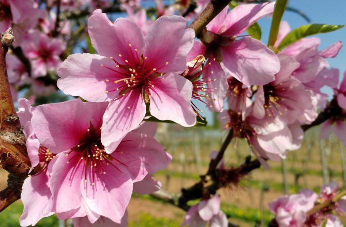 Lust auf Frühling – mit den Kräften der Natur den Alltagsstress vergessen